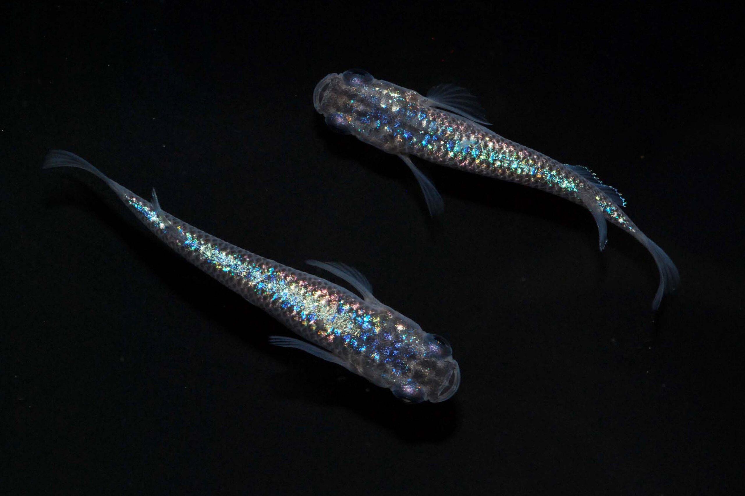 photo/Pisces